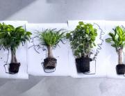 Kamerbomen - Woonplanten januari 2016 (Bloemenbureau Holland)